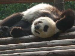 What Pandas do best